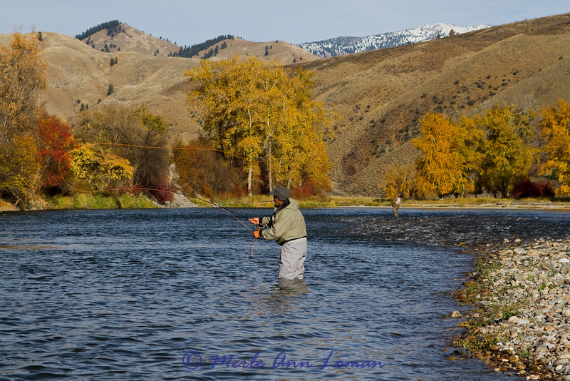 North Fork River in Idaho, fly fishing for Steelhead in late fall